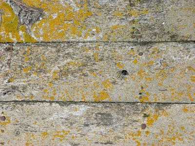 Image of wood mold but Will Vinegar Kill Black Mold on Wood?